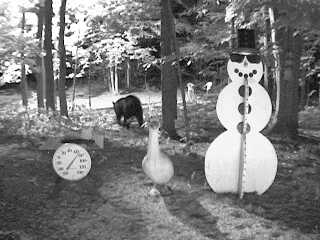 Black bear wandering past the snowman at night on August 12, 2007