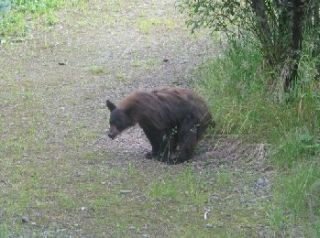 Looks like bears really do it in the woods.