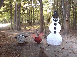 A bobcat visits the Snowman. Thank you Mark Oh for capturing this picture. 9-17-09.
