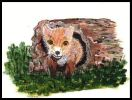 Fox cub peeking out of the end of a log. Painting courtesy of Tansy Phillips.