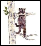 Raccoon climbing a tree. Painting courtesy of Tansy Phillips.